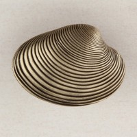 Clam Shell Cabinet Knob - Antique Brass (DP3AP) by Acorn