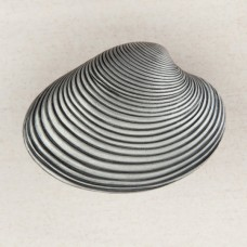 Clam Shell Cabinet Knob - Antique Pewter (DP3PP) by Acorn