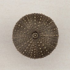Sea Urchin Cabinet Knob - Antique Brass (DP7AP) by Acorn